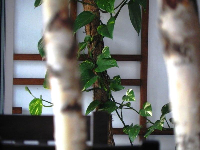restoran-del-rio-mostar-8-kopiraj