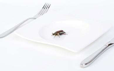 kukci